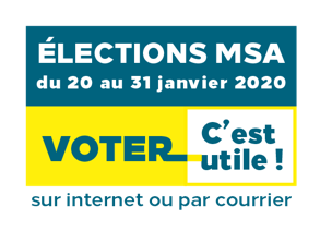 Election MSA