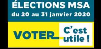 Election MSA